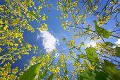 Sky Framed By Flowering Oilseed Rape