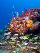 Fish Under a Reef Ledge