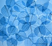 backdrop texture of colorful blue floral leaves