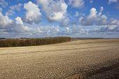 Chalky Farmland