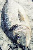 pescado fresco dorada sobre hielo - comida y bebida