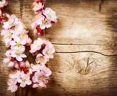 Spring Blossom over wood background