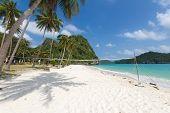 Coconut Trees On A Beach