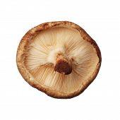 Shitake Mushroom Isolated On White Background, Close Up
