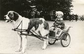 Vintage photo of little girl on dog drawn carriage (fifties)
