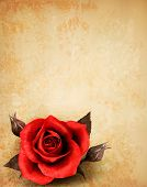 Rose on a vintage paper background. Vector.