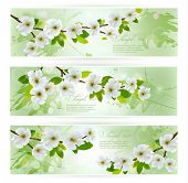 Three nature banners with blossoming tree branches. Vector illustration