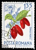 Romanian Post Stamp