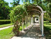 Pergola in Botanical Garden in Rio de Janeiro