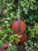 picture of double-bass  - Beautiful double - JPG