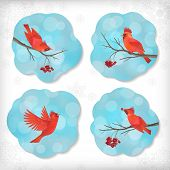 stock photo of rowan berry  - Winter vector set of Christmas stickers with birds waxwing Rowan berry tree branches snowflakes bokeh on cloud shapes blue abstract background - JPG