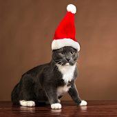 Cat with Santa Claus Hat.