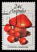 AUSTRALIA - CIRCA 1963: A stamp from Australia shows image of a cinnamon webcap (Cortinarius cinnamo