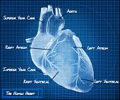stock photo of coronary arteries  - The Human heart blueprint concept background scene - JPG