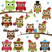 image of snow owl  - Vector Collection of Christmas Holiday Themed Owls and Branches - JPG