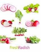 Set Juicy Radish With Green Leaves