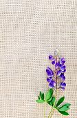 Lupine Purple On Sacking