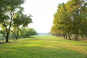 foto of morning  - morning light in public park with tree plant green grass field use as natural background backdrop or multipurpose copy space - JPG