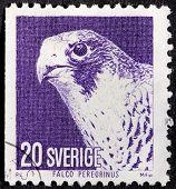 Falcon Stamp