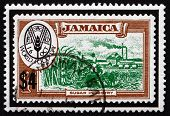 Postage Stamp Jamaica 1981 World Food Day, Sugar Industry