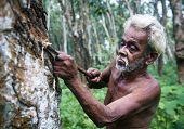 Sri Lankan man carving a rubber tree.