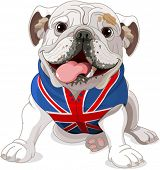 English Bulldog wearing a coat with the symbol of the English flag