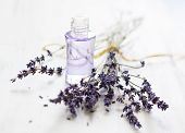 stock photo of fragrance  - Lavender oil and bunch of dried lavender flower - JPG