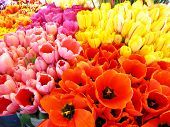 Detail of bunches of fresh tulips in flower market