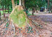 Termite Mound In The Park Of Si Sa Ket, Thailand