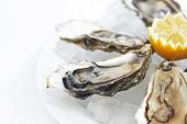 Oysters with lemon on white plate
