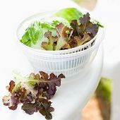 foto of spinner  - Salad spinner with iceberg and red lettuce diet concept - JPG