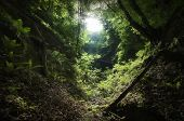 stock photo of ethereal  - Jungle with vegetation and light shining in valley - JPG