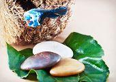 Decorative Bird's Nest With A Stones
