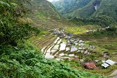 Famous rice fields terraces in the Batad village in Philippines