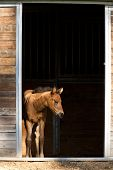 Colt Waits By The Door.