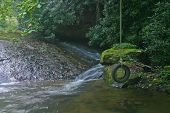 picture of tire swing  - an idle tire swing next to a mossy stream deep in the woods - JPG
