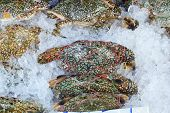 stock photo of cooked blue crab  - fresh crab at the market   - JPG