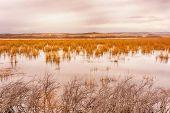 Peaceful Autumn Lake