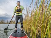 senior paddler in life jacket enjoying stand up paddling on lake, fall scenery with cattail in Fort Collins, Colorado