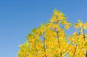 Autumn Background With Golden Lush Foliage