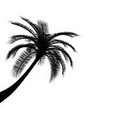 Black on white palm tree palm tree