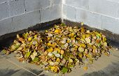 A pile of autumn leaves that have fallen.