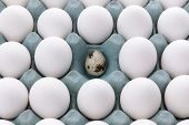 White Eggs In The Packaging And Quail Egg