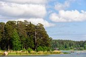 Forest On Islands In Finland Gulf