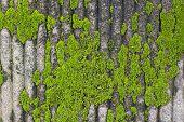 Moss On Wall