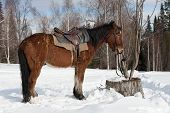 foto of harness  - Harnessed horse standing near the house and waiting for the owner - JPG