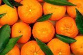 stock photo of mandarin orange  - fresh mandarin oranges with leaves full frame - JPG