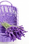 pic of lavender plant  - basket full of lavende  - JPG