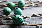picture of pussy-willows  - Bird colorful eggs in nest and pussy willow branches on wooden background - JPG