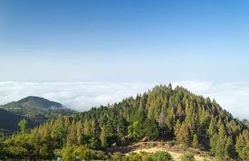 stock photo of burro  - Inland Gran Canaria view over the tree tops towards cloud cover on the north of the isalnd - JPG